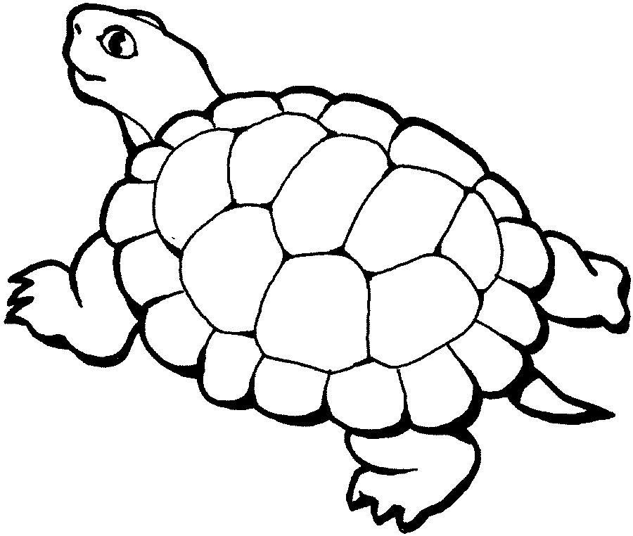 animals coloring pages - Coloring Pages Animals