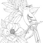 Bird Coloring Pages (1)