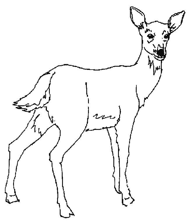 Deers-coloring-page-17