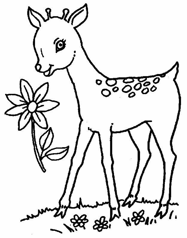 Deers-coloring-page-6