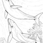 Dolphin Coloring Pages (12)