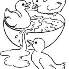 Ducks-coloring-page-6