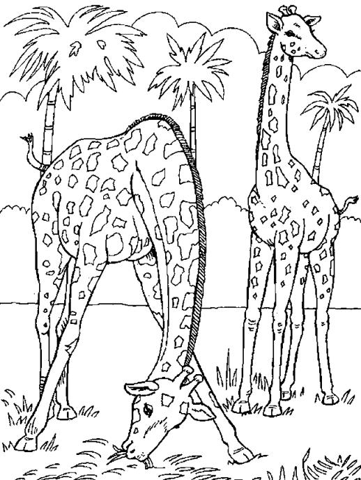 Giraffes-coloring-page-23