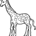 Giraffes-coloring-page-24