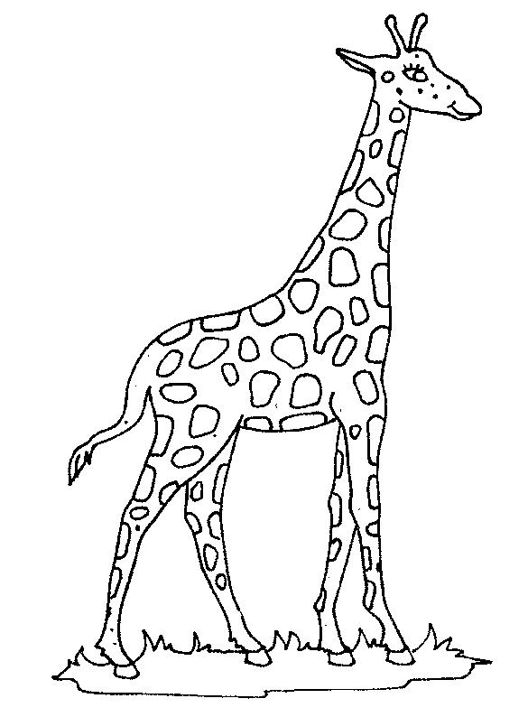 Giraffes-coloring-page-6