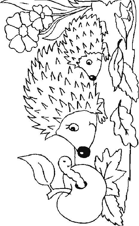 Hedgehogs-coloring-pages-29