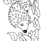 Hedgehogs-coloring-pages-33