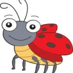lady bug insect