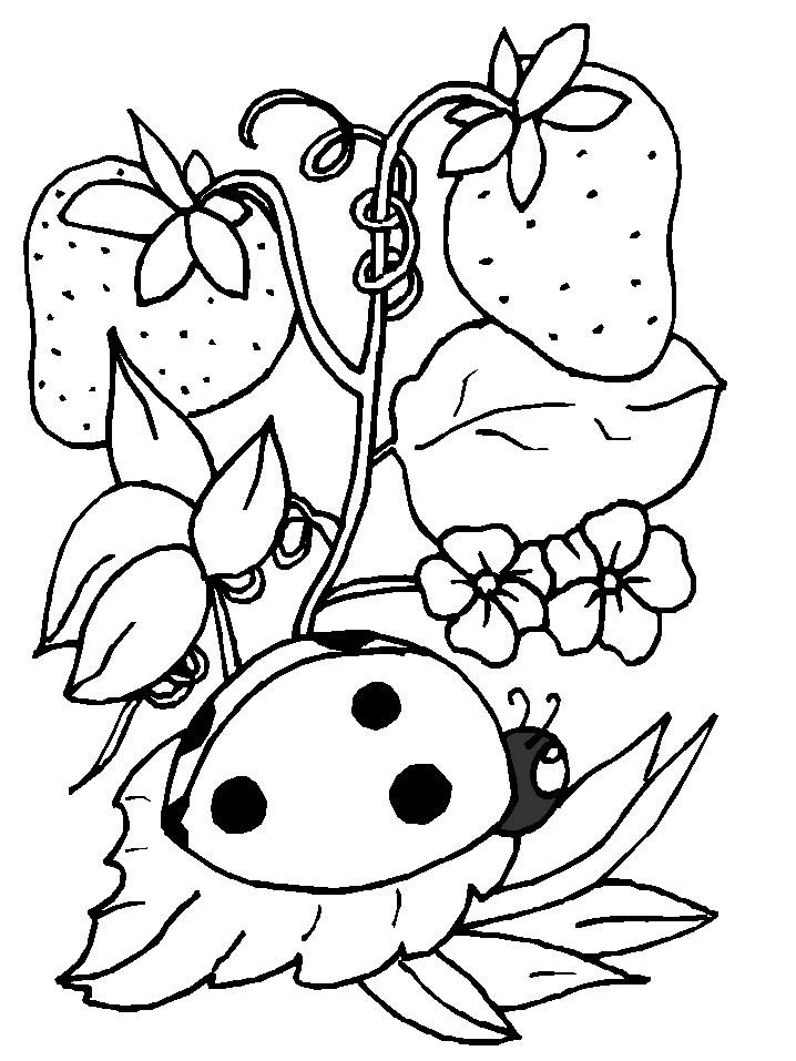 Insects-coloring-page-20