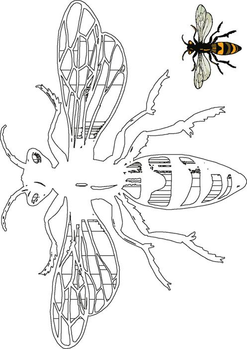 Insects-coloring-page-3