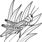 Insects-coloring-page-56