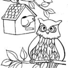 Owls-coloring-pages-1