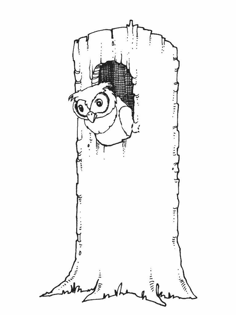 Owls-coloring-pages-4