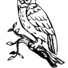 Owls-coloring-pages-5