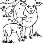 Sheep-coloring-page-35