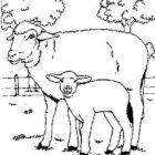 Sheep-coloring-page-38