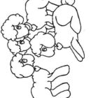 Sheep-coloring-page-47