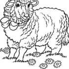 Sheep-coloring-page-55