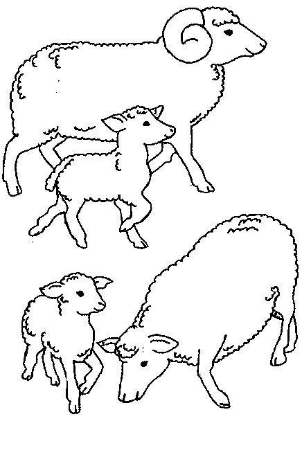 Sheep-coloring-page-56
