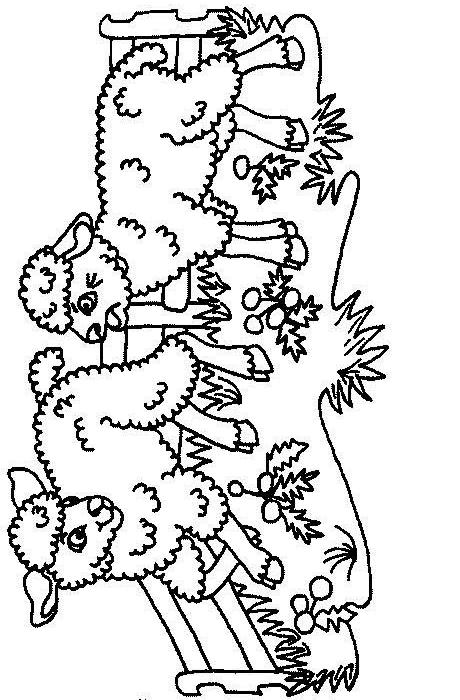 Sheep-coloring-page-66