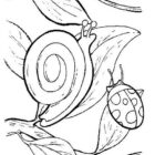 Snails-coloring-page-9