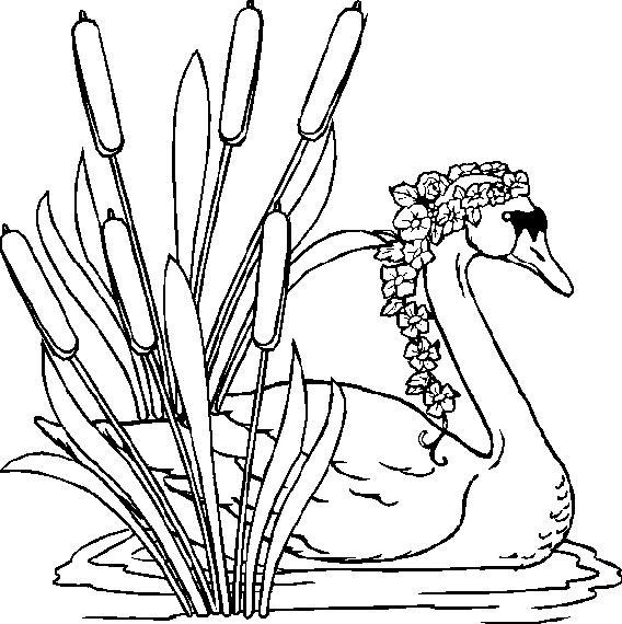 Swans-coloring-page-13