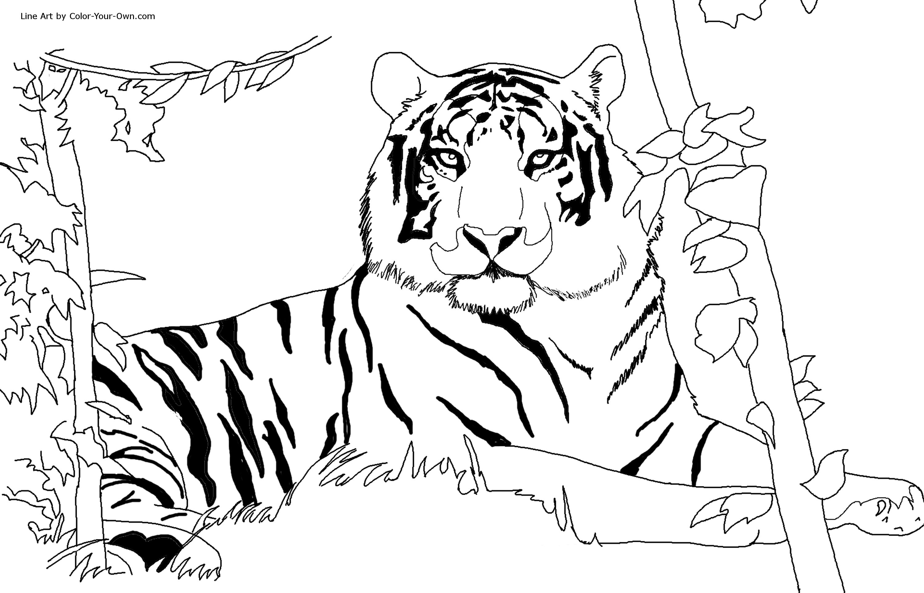 Free coloring pages realistic animals - Coloring Pages Tigers Print Simonschoolblogcom