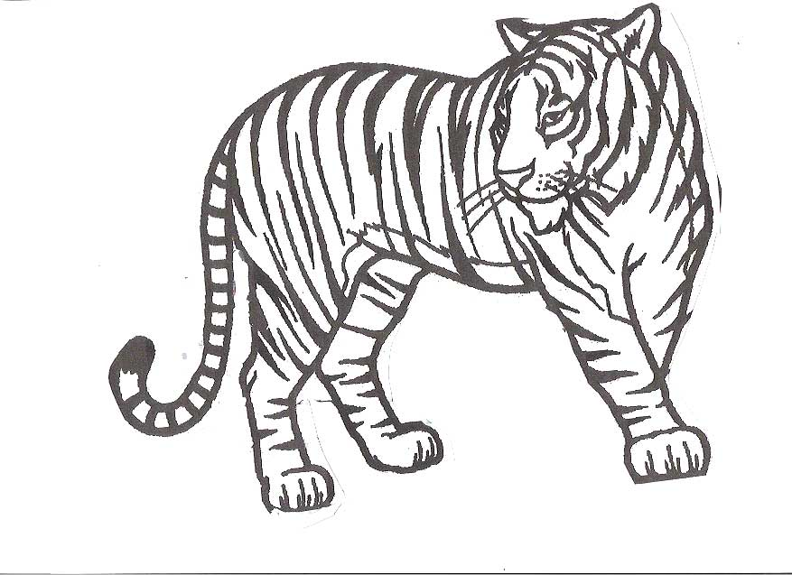Tigers Coloring Pages Coloring