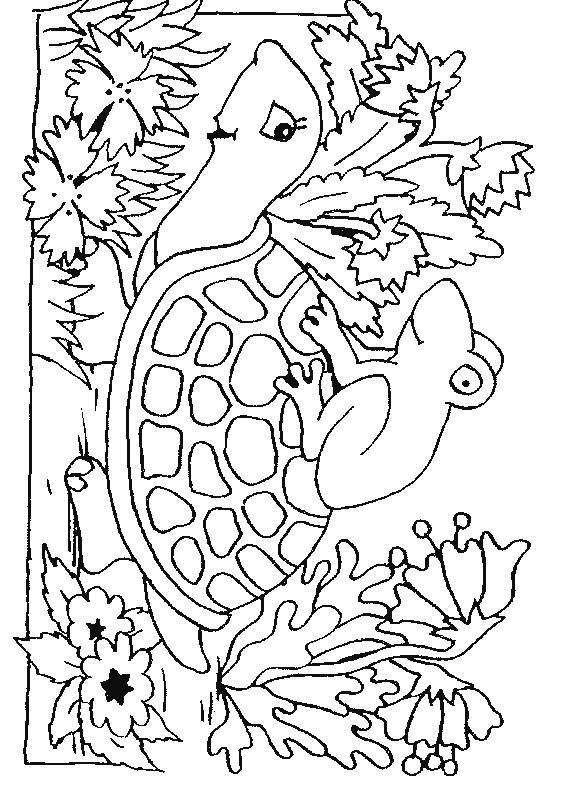 Turtles-coloring-book-17