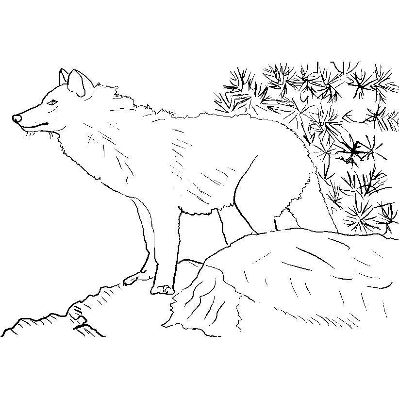 Wolves-coloring-page-24