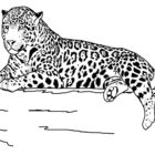 Animal Coloring Pages (16)