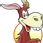donkey cool facts