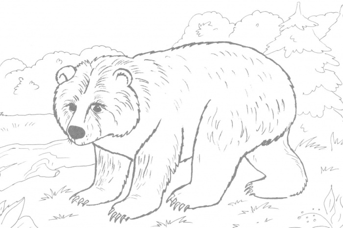 Bear Coloring Pages (1) - Coloring Kids