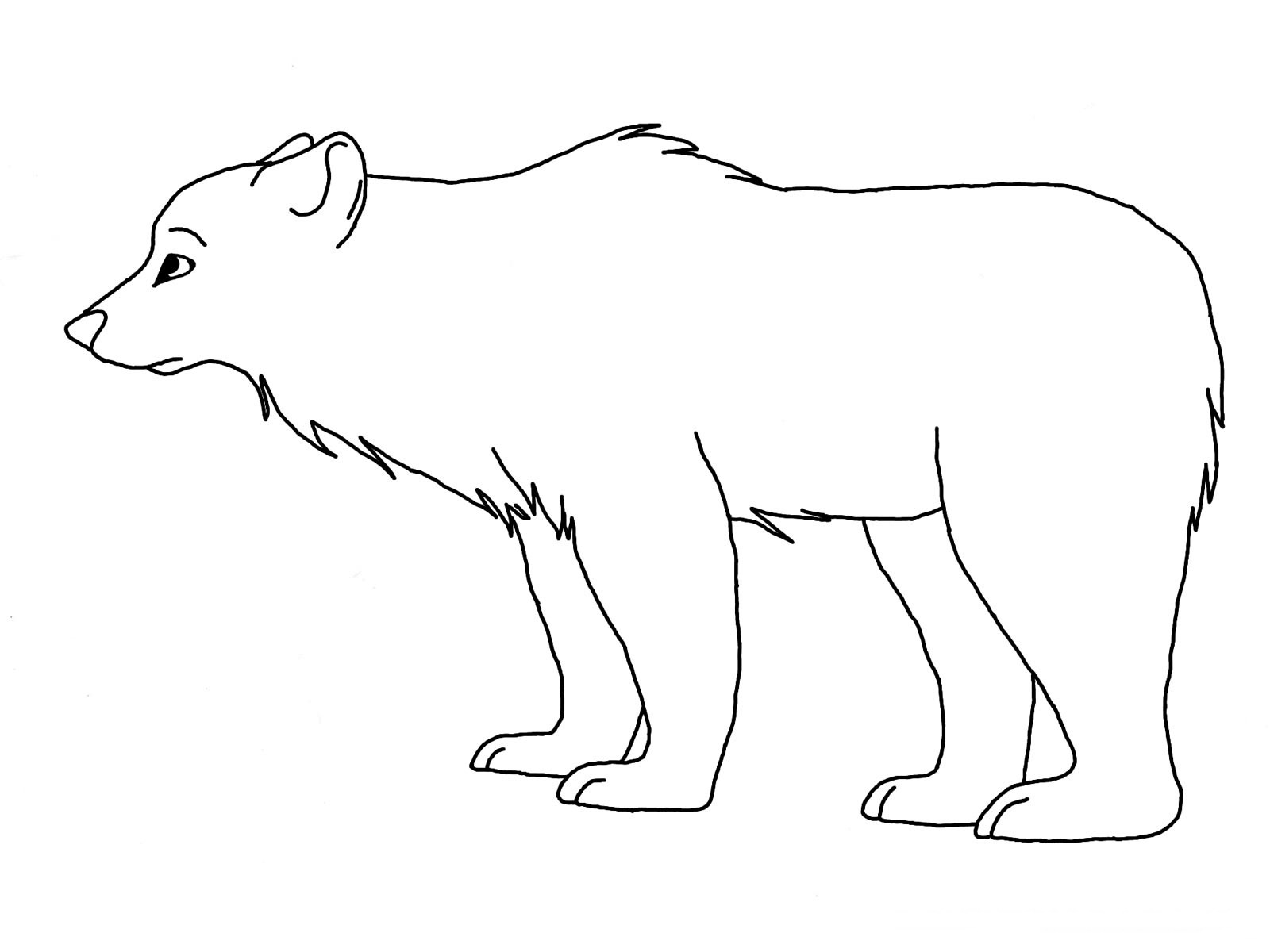 bear coloring pages 11 coloring kids