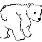 Bear Coloring Pages (6)