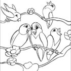 Bird Coloring Pages (4)