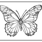 butterfly coloring pages 10 140x140 Butterfly Coloring Pages