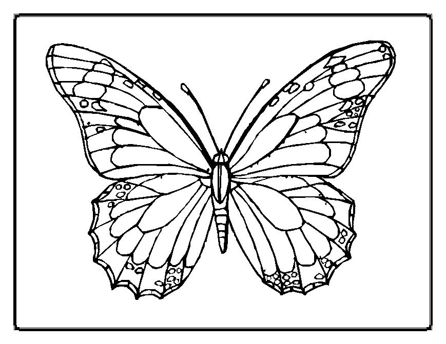 butterfly coloring pages - Printable Butterfly Coloring Pages