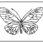butterfly coloring pages 11 140x140 Butterfly Coloring Pages
