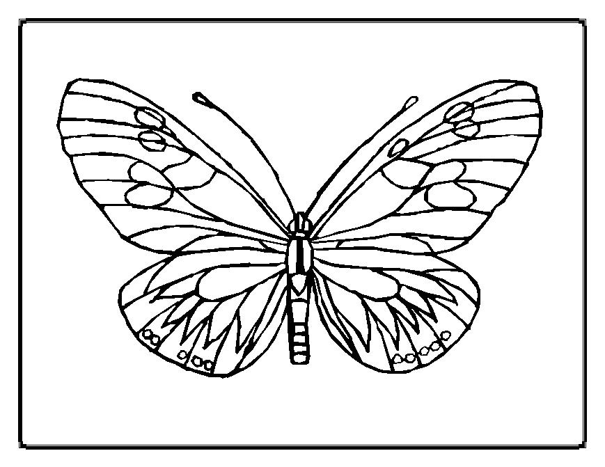 download butterfly coloring pages 11 print