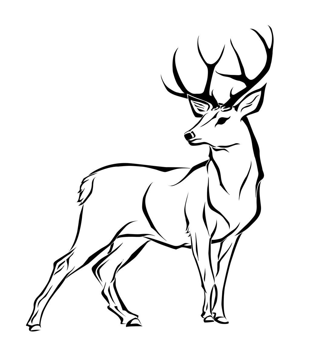 deersq
