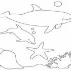 Dolphin Coloring Pages (2)