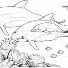 Dolphin Coloring Pages (22)