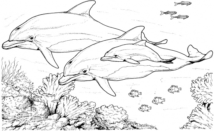 Dolphin Coloring Pages 22