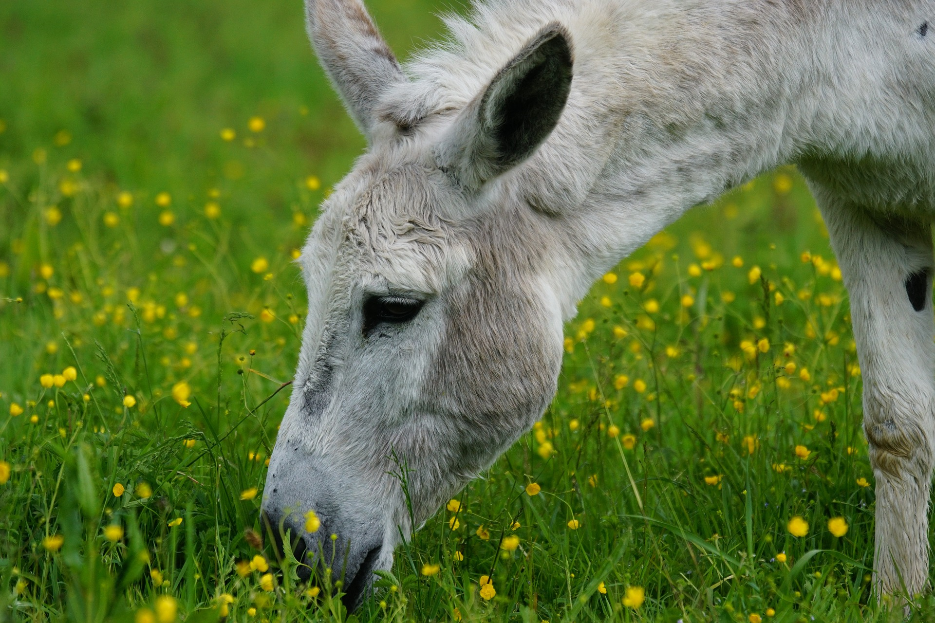 Donkey Cool Facts7 Coloring Kids