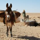 donkey carrying load in the sahara desert