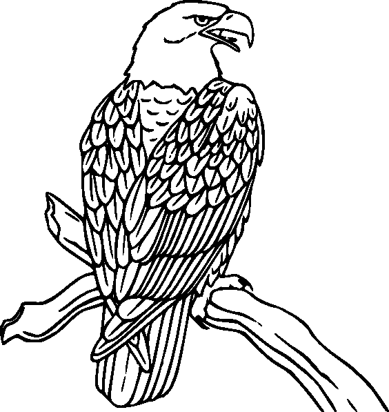 eagle coloring pages for kids - photo #41