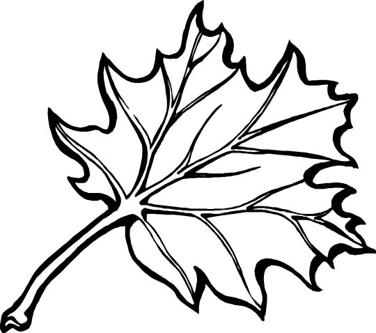 Fall Coloring Pages (3)