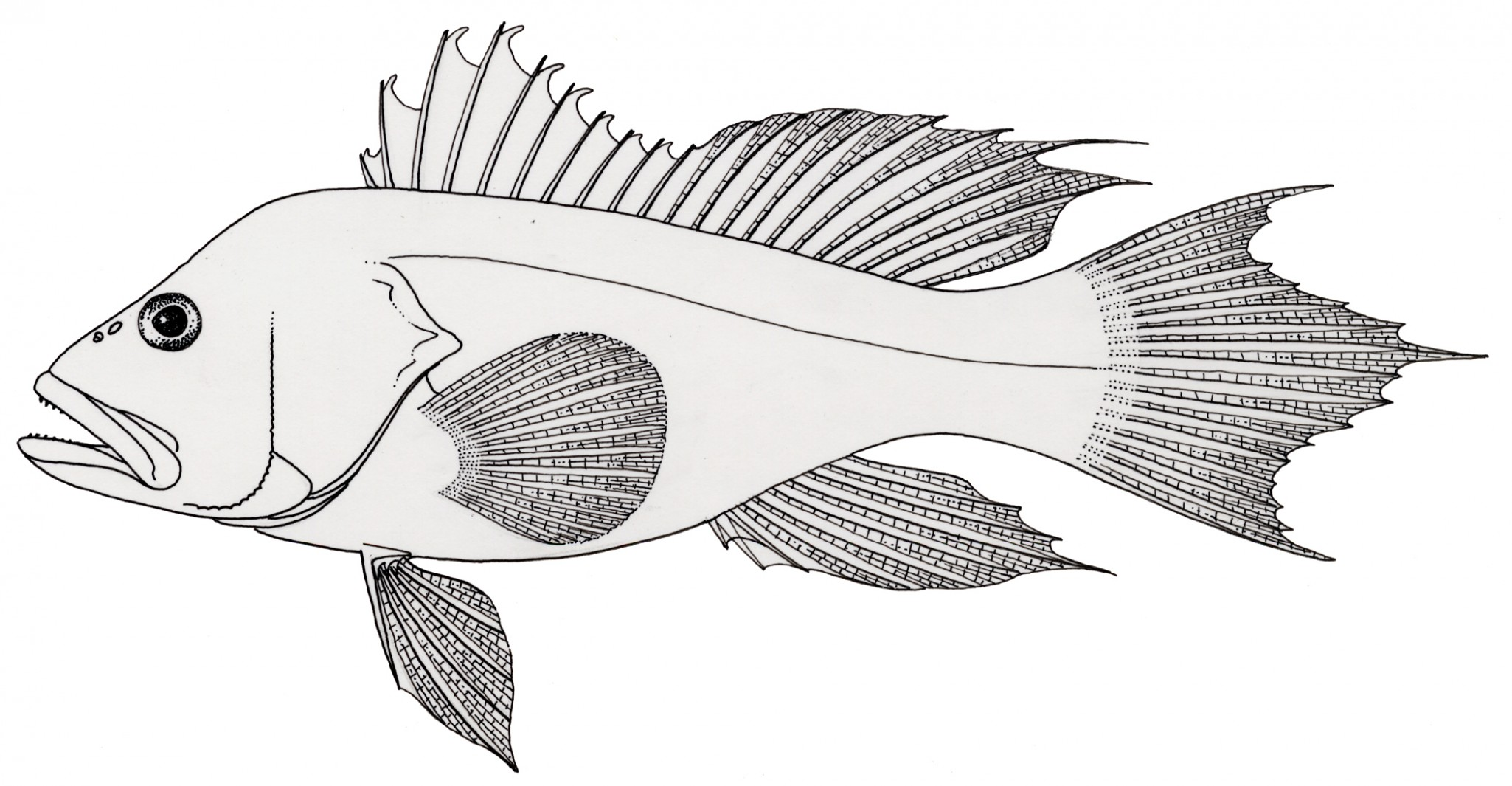 download fish coloring pages 6 print