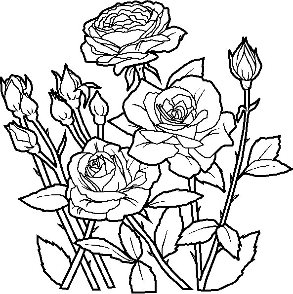 Flower Coloring Pages (19)